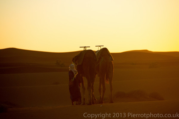 Camels at sunset in the Sahara desert, Morocco