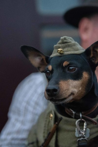 Small dog wearing military hat at Sheringham 1940s weekend